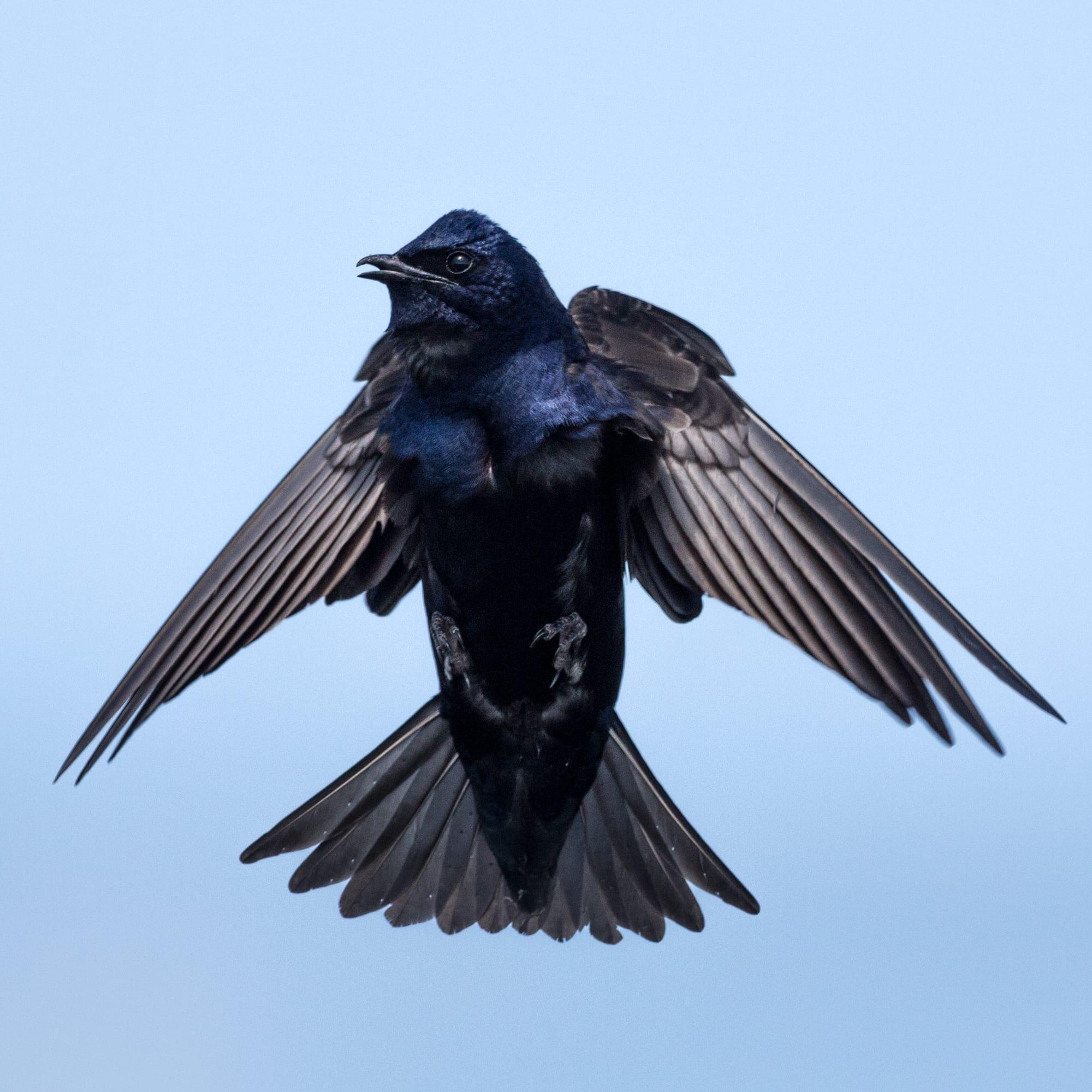 small bird-2