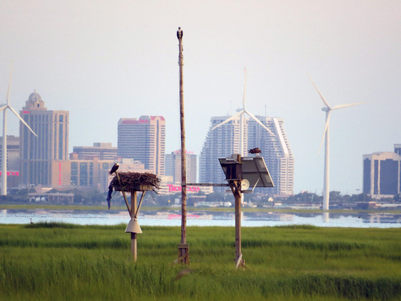 Solar Powered Osprey-Cam - Outside of Atlantic City, NJ