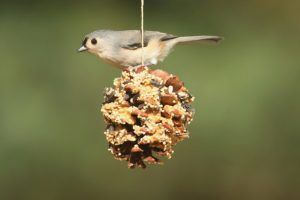 Elder Care Renton WA - Bird Watching in Spring for Elders