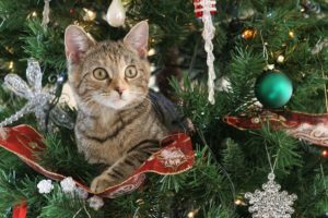 Home Care Services Tacoma WA - Christmas Tree Safety Tips for Your Elderly Parent's Home