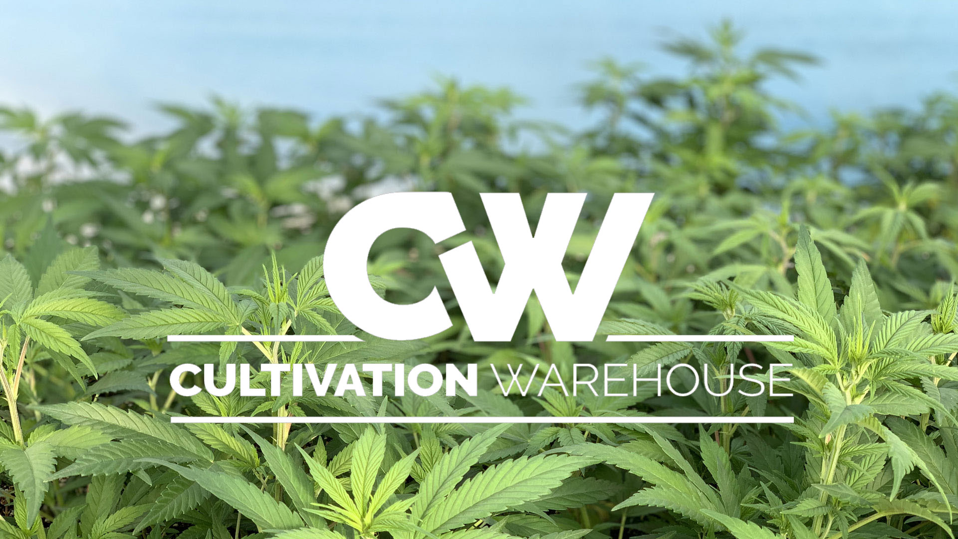 New branding for a New Era of CW