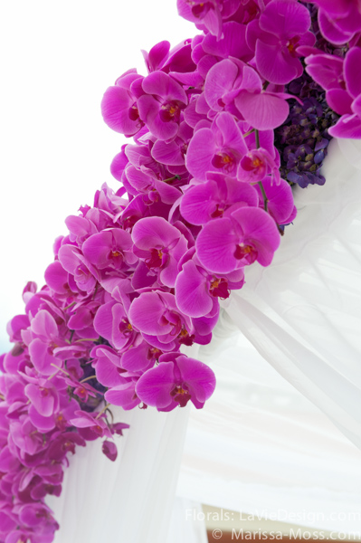 la-vie-en-rose-phalaenopsis-orchid-structure-drape-white-purple-ceremony-hyatt-clearwater-beach-florida