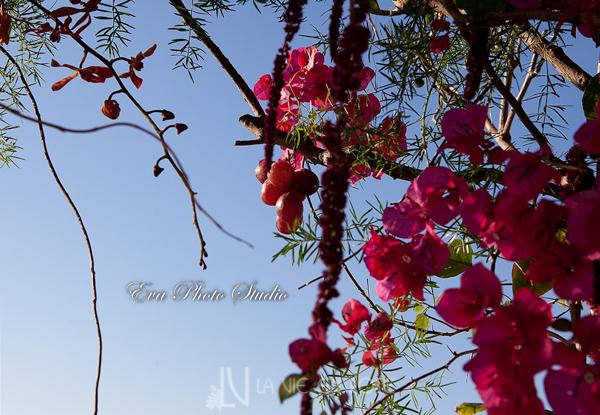 la-vie-en-rose-wedding-ceremony-bougainvilliea-grapes-orchid-amaranthus-berries-westin-tampa-bay-florida