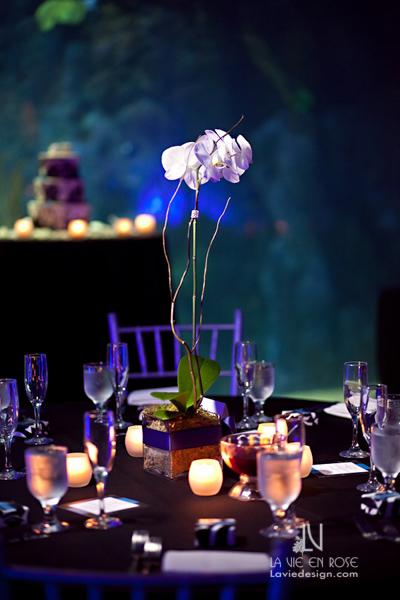 la-vie-en-rose-wedding-guest-table-orchid-plant-florida-aquarium-tampa-