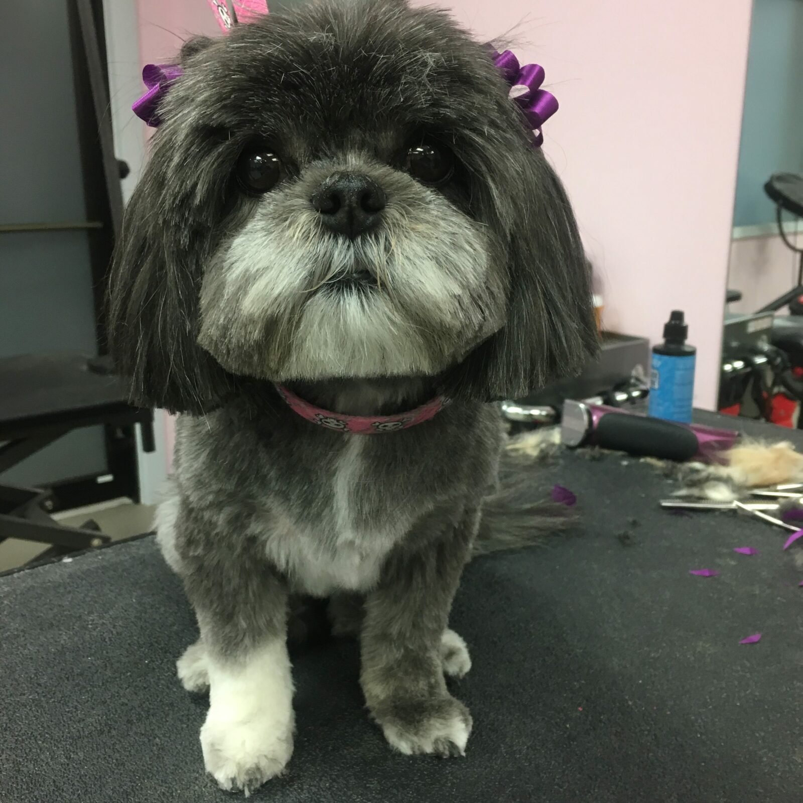 Dog Groomers Crown Point