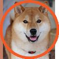 Smoochies Dog Grooming Indiana