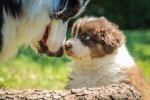 Dog Grooming Introduction Tips Smoochie-Pooch