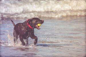 Dog Grooming Smoochie-Pooch