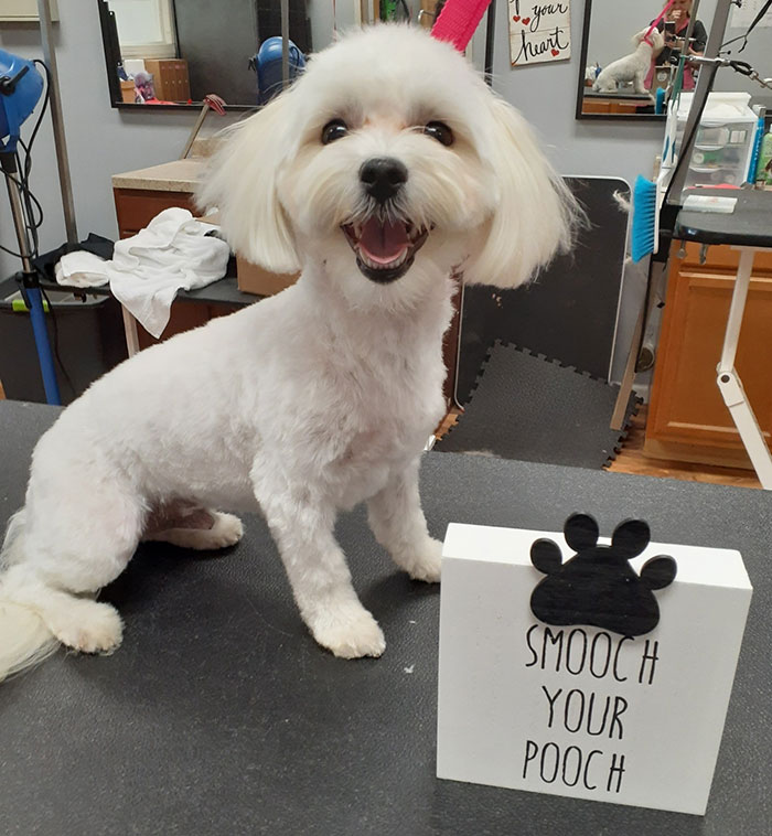 Dog Grooming Portage