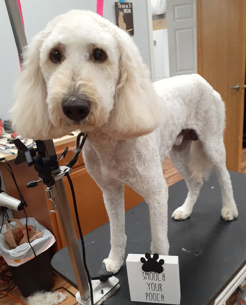 Mobile Pet Grooming Portage