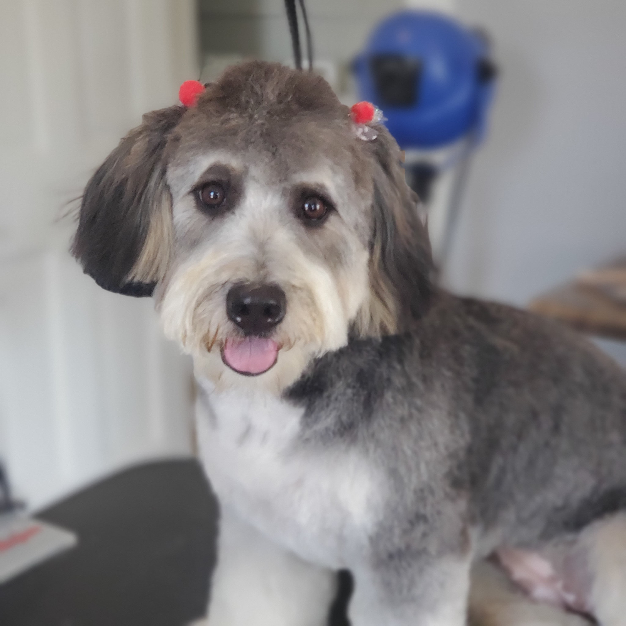 Mobile Dog Grooming In Valparaiso