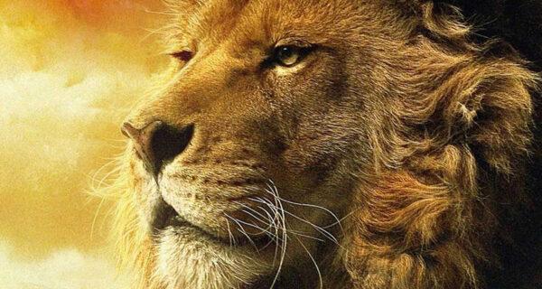 Rei Davi