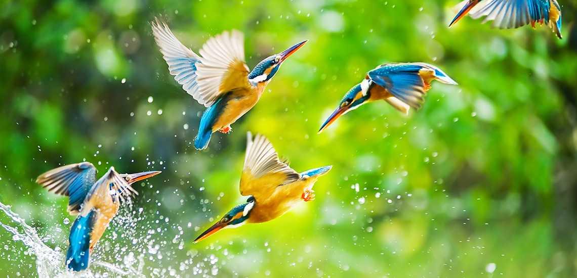 CMS_Creative_164657191_Kingfisher