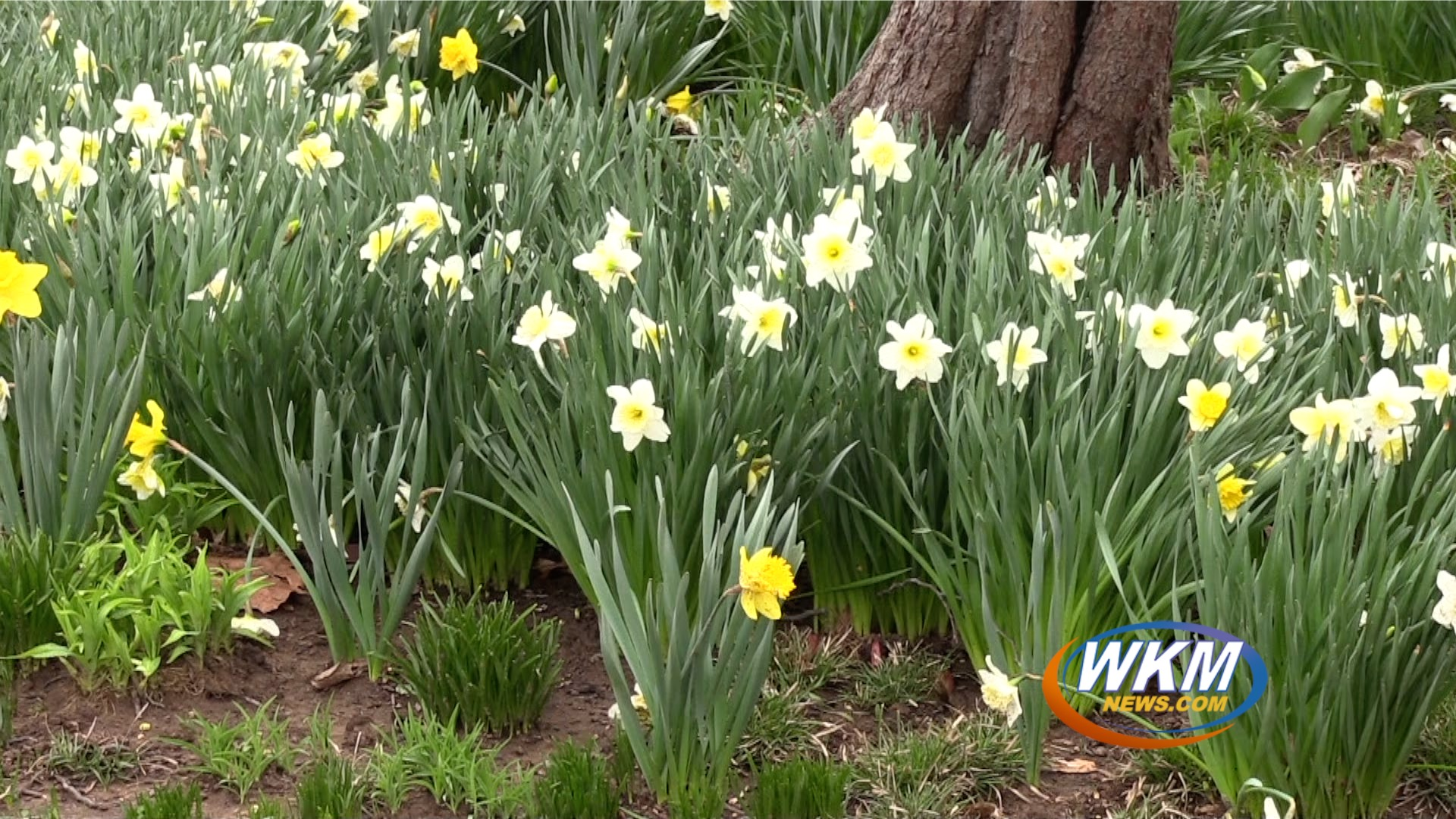 It's Officially Spring! Does That Mean Spring Weather? Find Out in Your WKM News Weekend Weather Forecast!