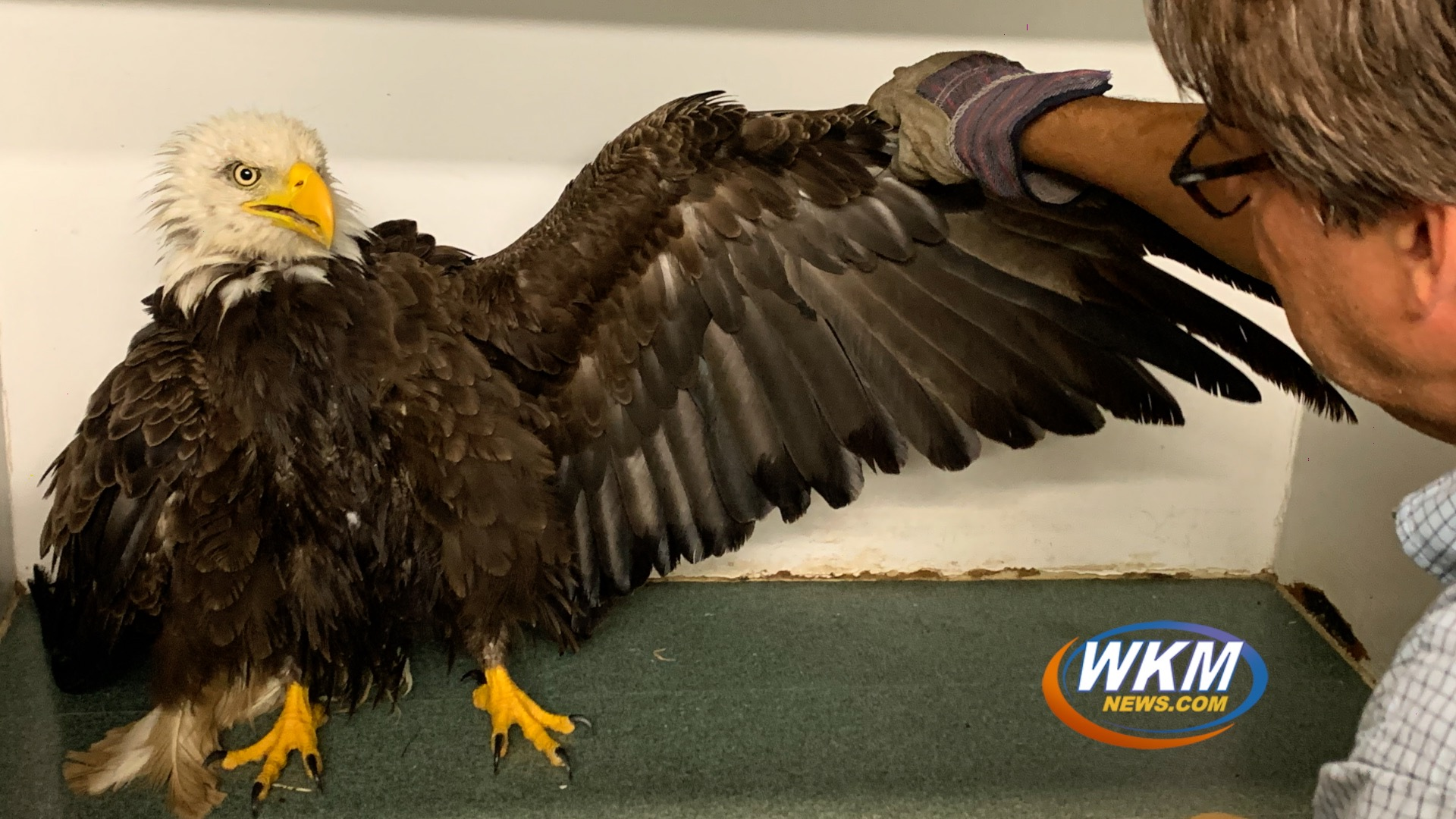 DNR Releases Rehabilitated Bald Eagle at Hardy Lake