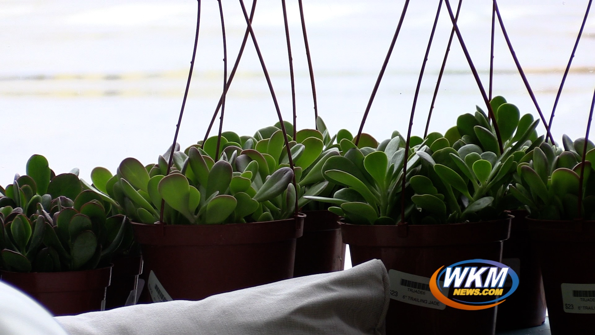 New Downtown Business To Fill Houseplant Needs