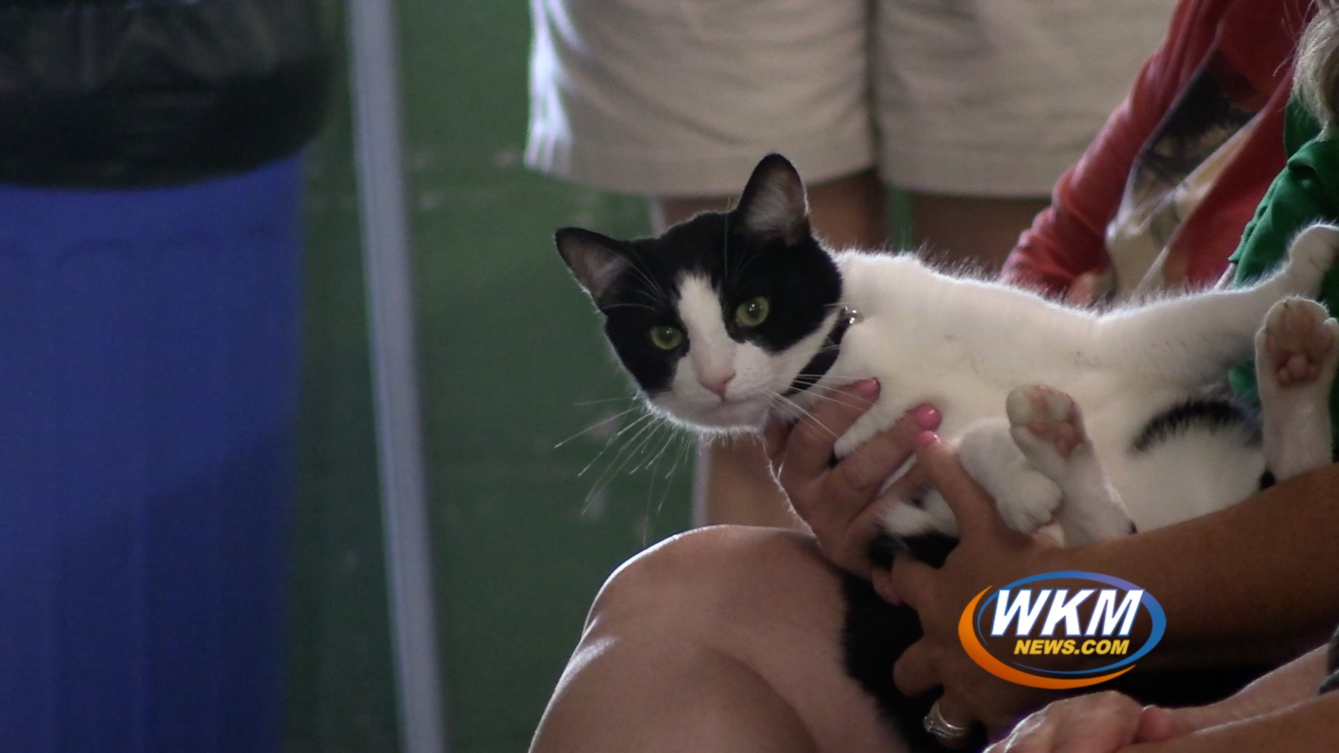 """""""Paw""""some Cat Show at the Jefferson County Fair"""