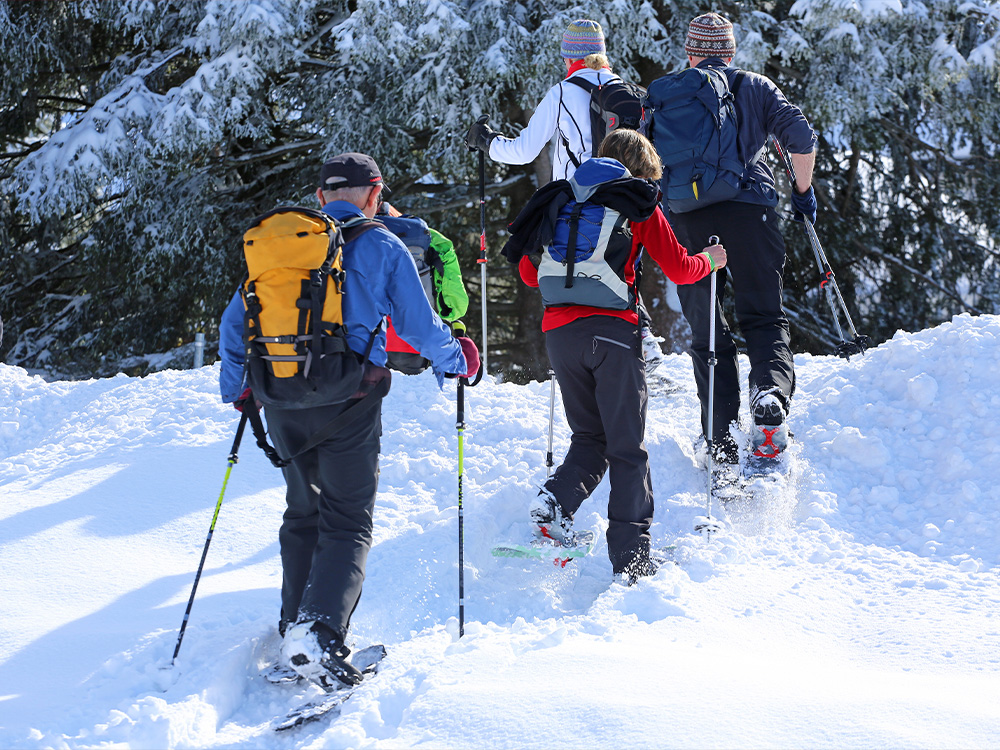 Group snowshoeing into a forest