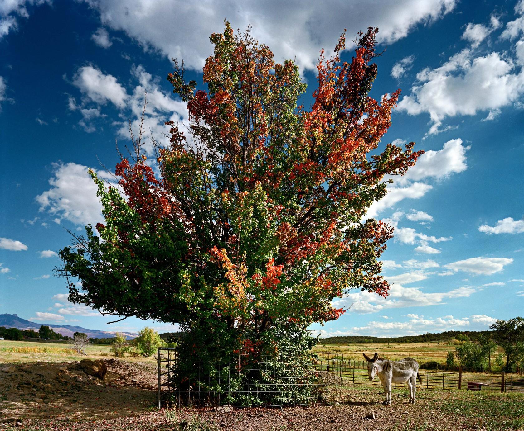 Dorito and the Pear Tree