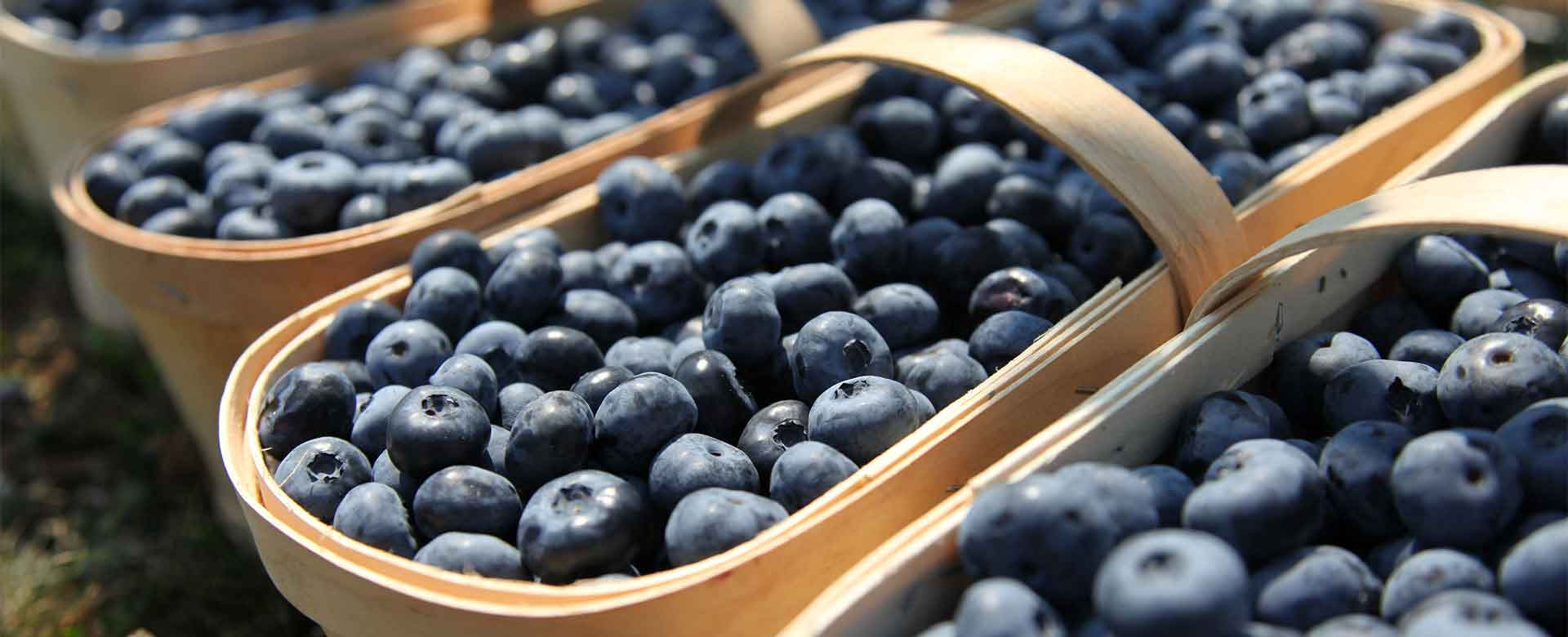 NJ Blueberries