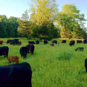 Humane Farming Mentorship