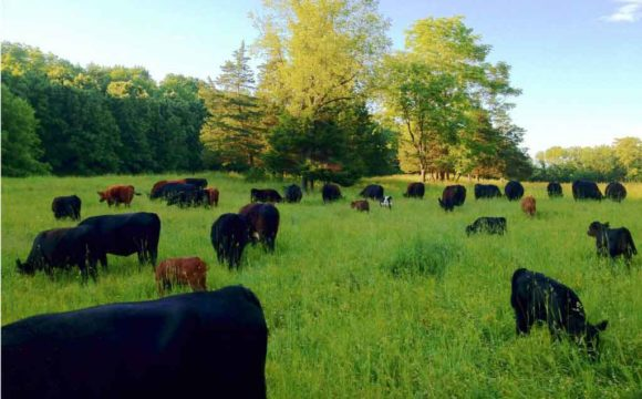 Securing Fresh Food from Fertile Soil, Challenges to the Organic and Raw Milk Movements
