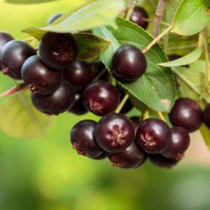 Niche Berry Marketers Gathering