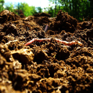 Get your soil tested this spring