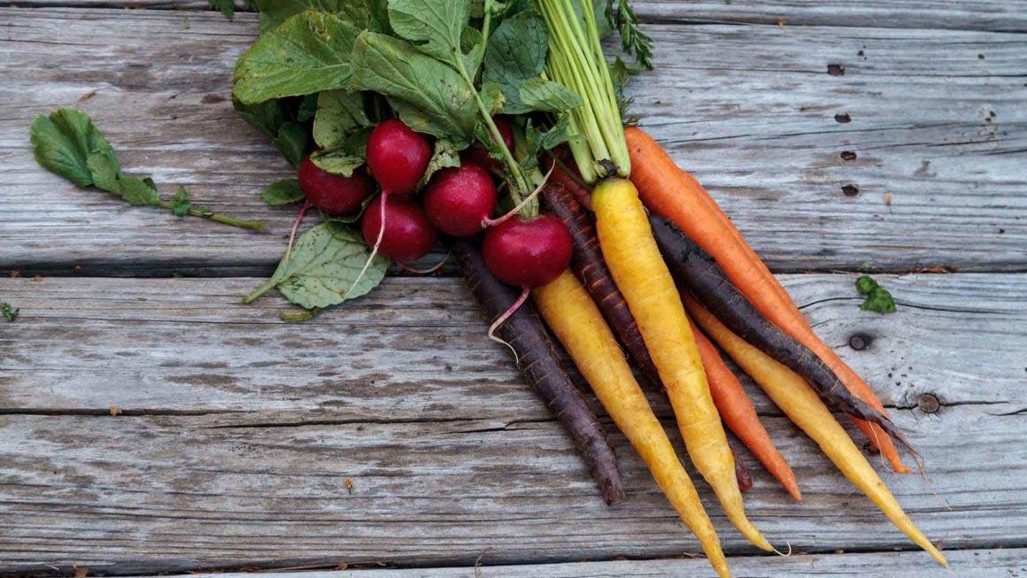 Organic Carrots and Radish