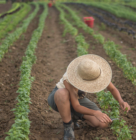Cherry Valley Cooperative Farmer