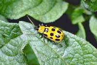 Managing Garden Pests