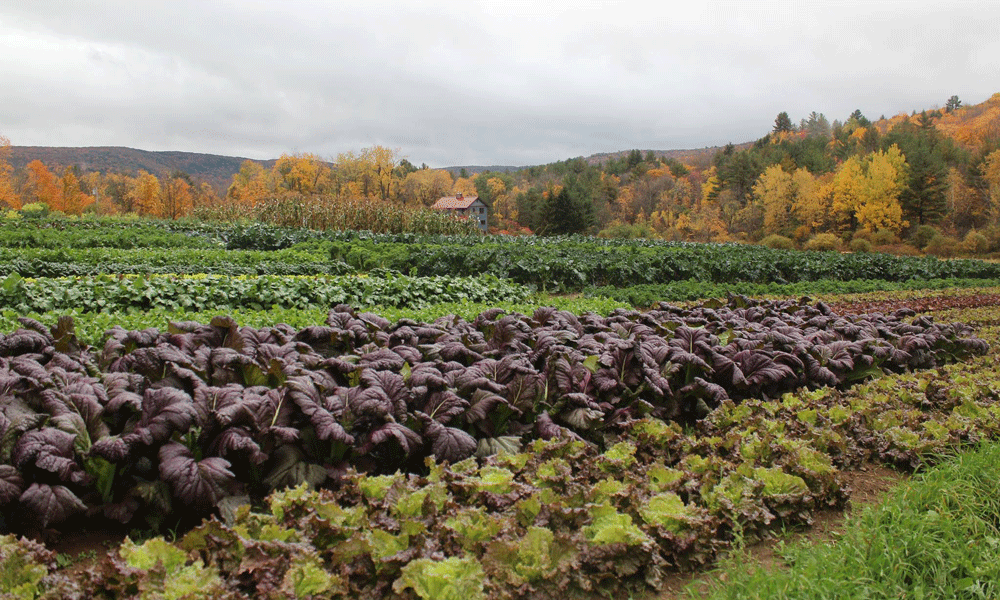 Organic produce sales up 14% in 2020, topping $8.5 billion