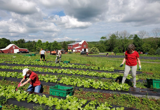 NJ Farms, Donations, Volunteers and Food Security
