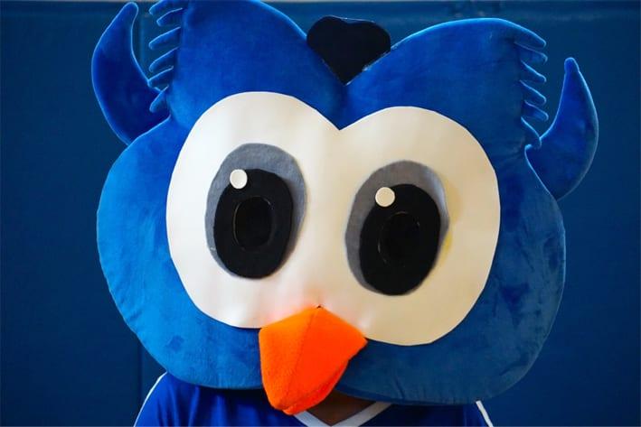 Owlbert Closeup