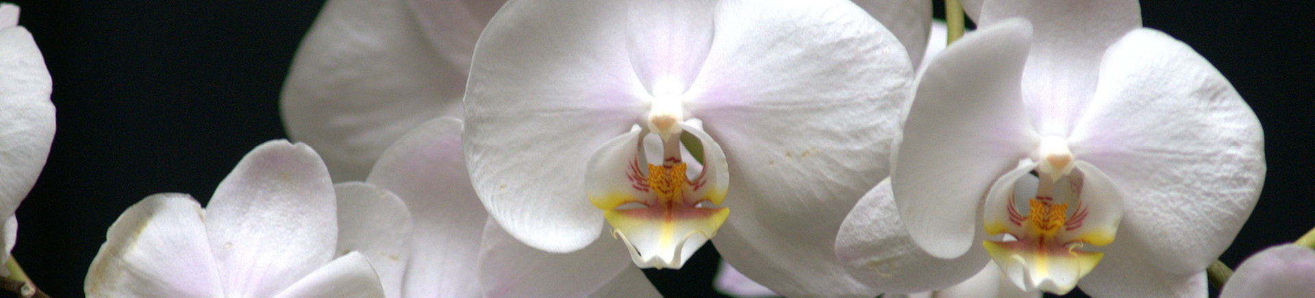 40th Annual Mobile Area Orchid Show and Sale – Bellingrath Gardens and Home