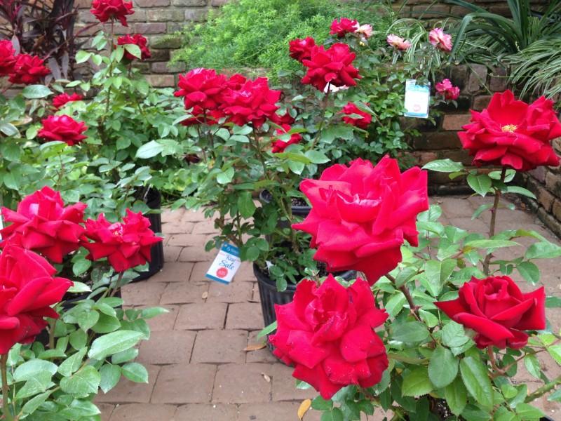 Bellingrath Gardens: May Events