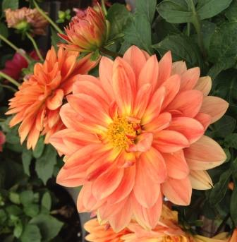 May events at Bellingrath Gardens and Home