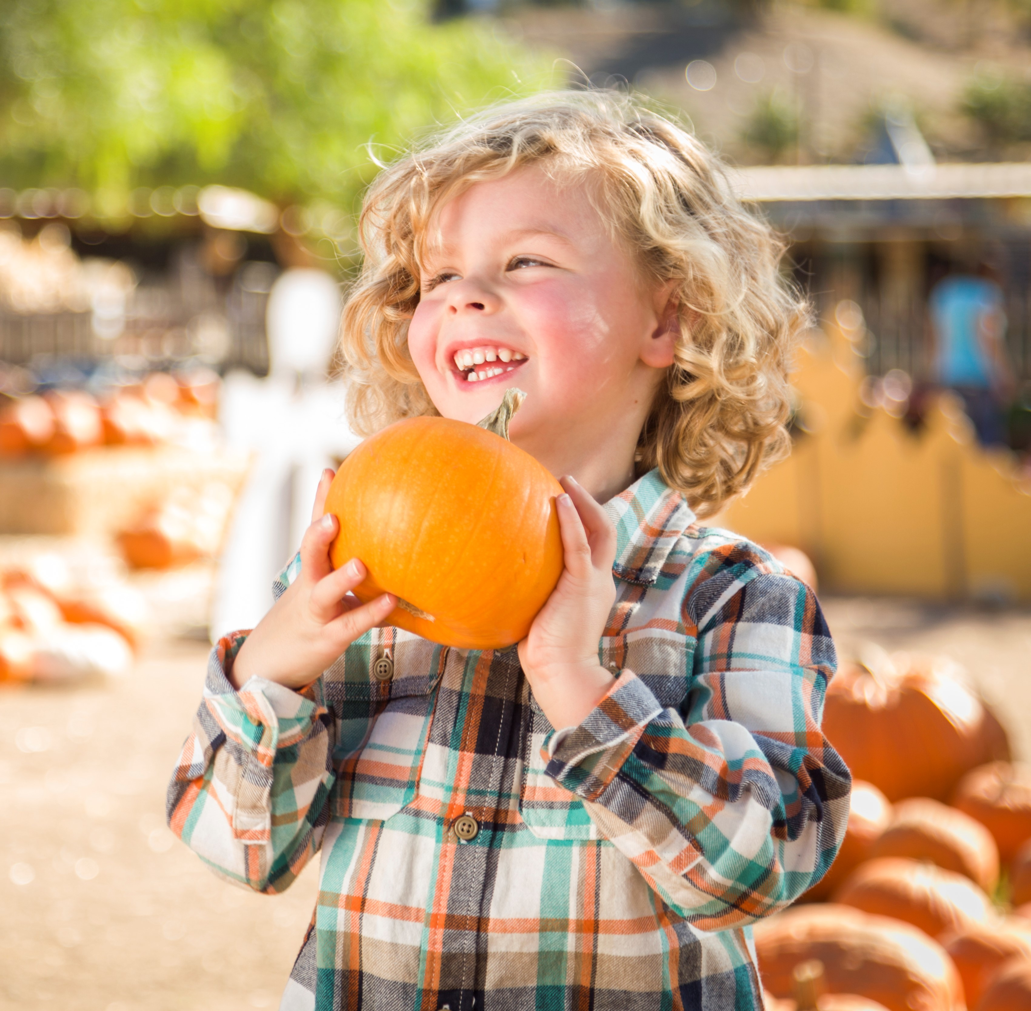 Fall Festival Comes to OWA Starting Sept. 21