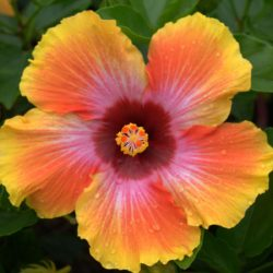 August happenings at Bellingrath Gardens and Home