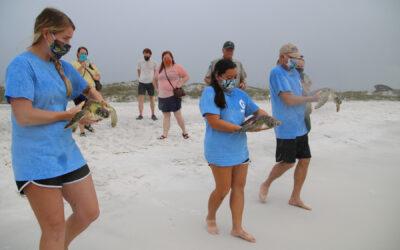 Gulfarium C.A.R.E. Center Successfully Released Four Rehabilitated Sea Turtles