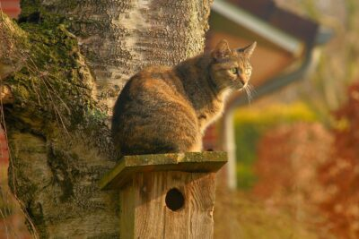 The Best Cat Food For Older Cats With Reviews - A Complete Guide to Feeding your Cat
