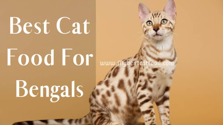 Best Cat Food For Bengals   Can Bengal Cats Eat Dry Food?