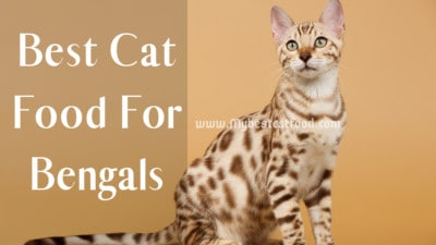 Best Cat Food For Bengals | Can Bengal Cats Eat Dry Food?