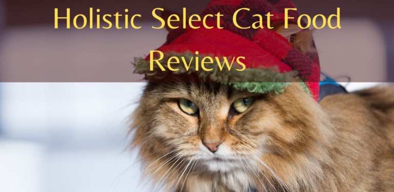 Holistic Select Cat Food Reviews and Feeding Guide   Does Holistic Select Offer?