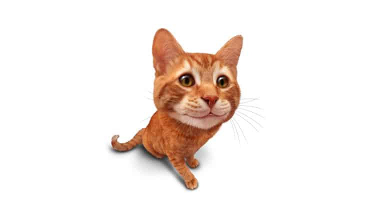 Fresh Pet Cat Food Reviews | Positive and Negative Review | MyBestCatFood