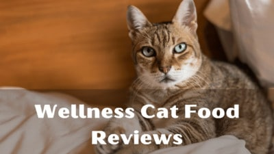Wellness Cat Food Reviews 2020 | Top Wet and Dry Food Of Wellness Core By MyBestCatFood