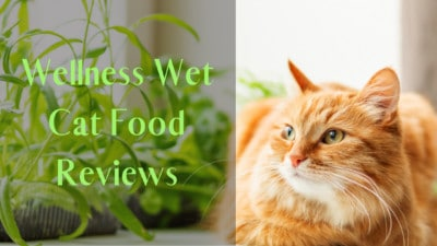Wellness Wet Cat Food Reviews | Top 6 Reviewed Wellness Wet Cat Food | My Best Cat Food