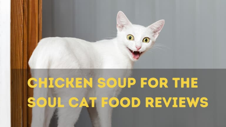 5 Chicken Soup For The Soul Cat Food Reviews And Key Benefits and Guiding Reviews