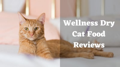Wellness Dry Cat Food Reviews | 6 Best Cat Food By Wellness Core | My Best Cat Food