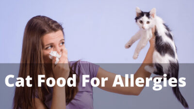 7 Best Dry Cat Food For Allergies and Ingredients Benefits